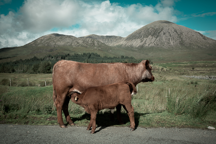 scotland2015-0041