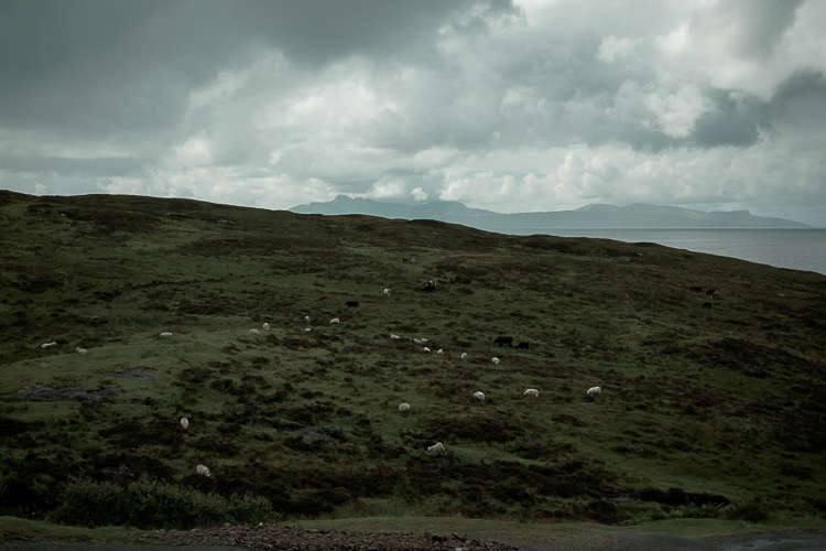 scotland2015-0051