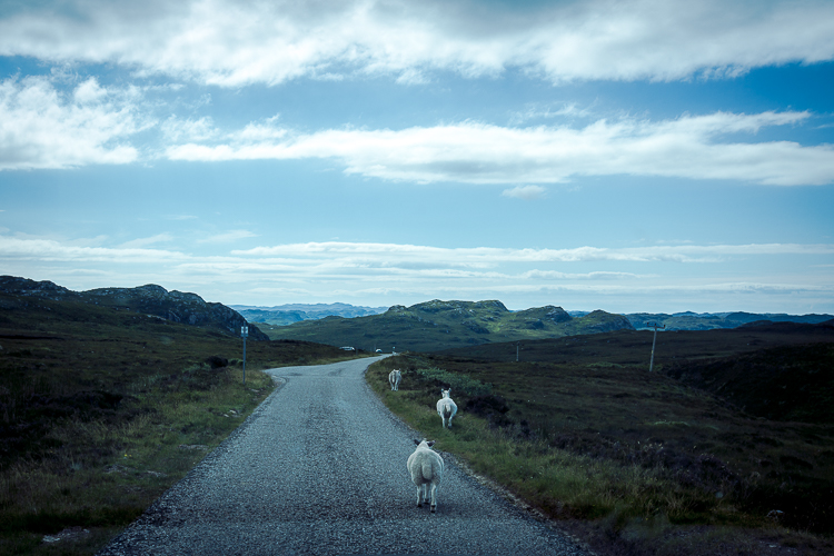 scotland2015-0090