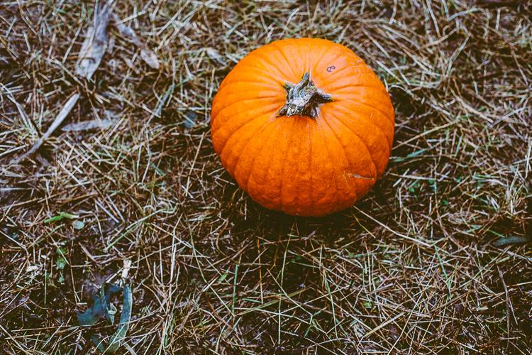 pumpkin_0001
