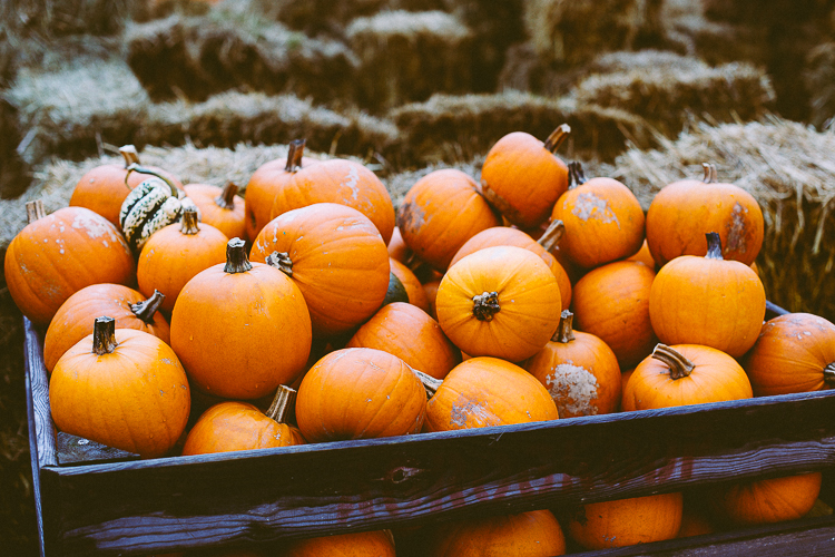 pumpkin_0012
