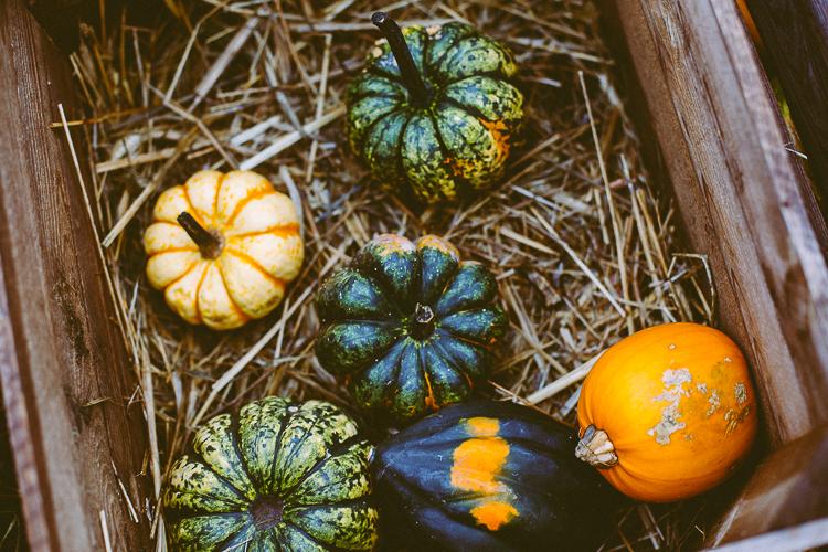 pumpkin_0018