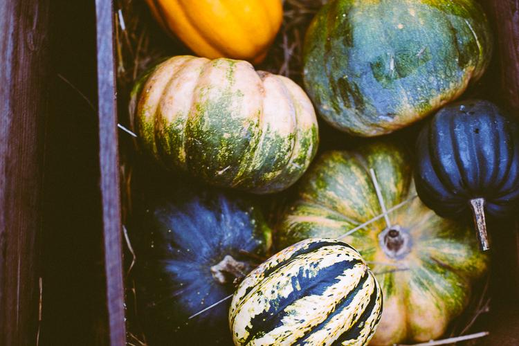 pumpkin_0019