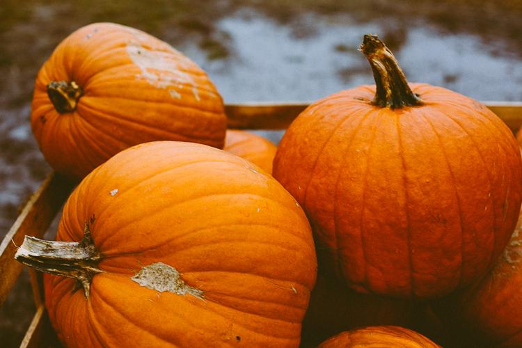 pumpkin_0020