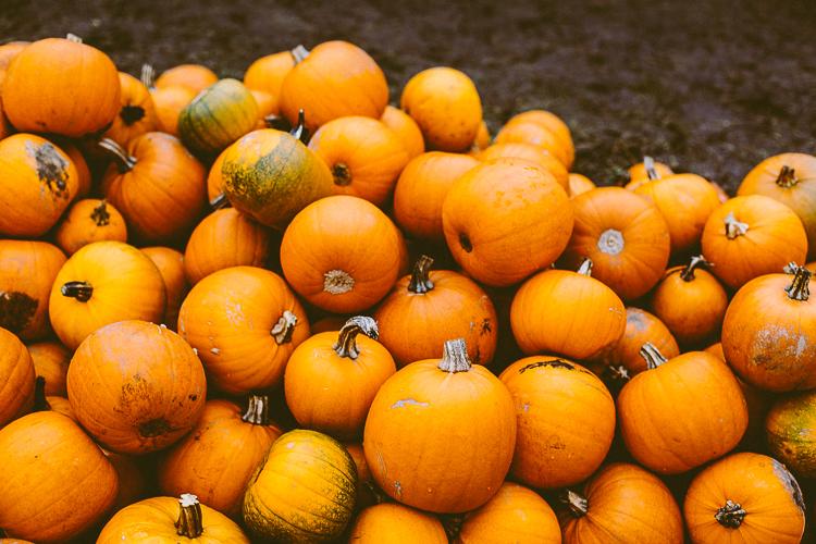 pumpkin_0021