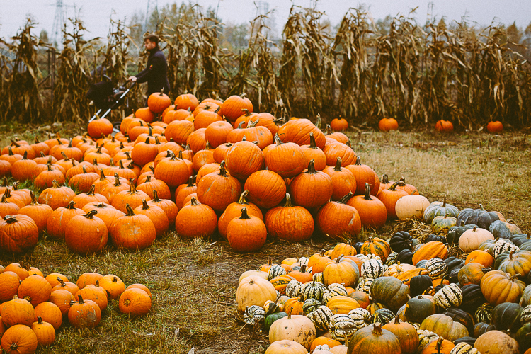 pumpkin_0022