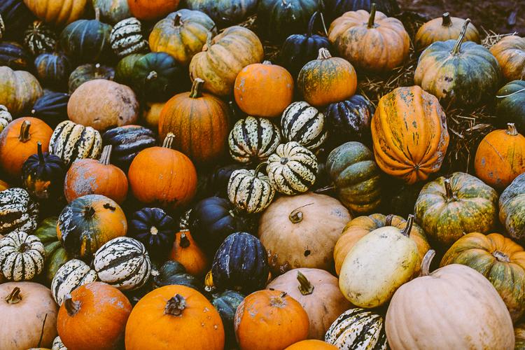 pumpkin_0027