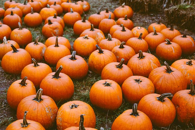 pumpkin_0028