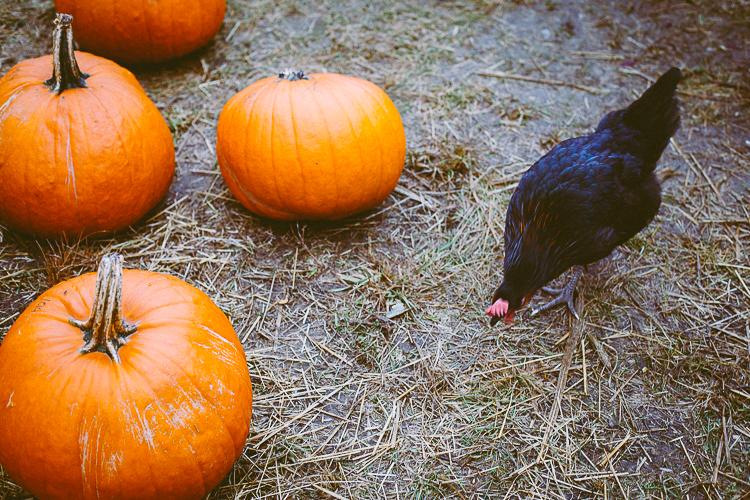 pumpkin_0029